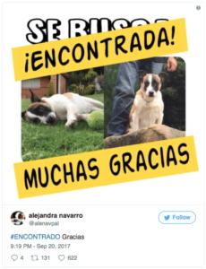 mascotas encontradas sismo