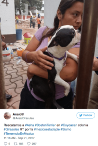 terremoto 19s mascotas extraviadas