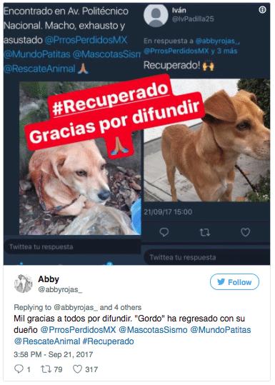 perros sismo 19s