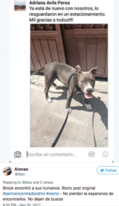 perros sismo 19s