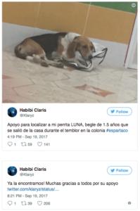 perritos sismo 19s