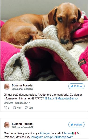 perritos sismo méxico